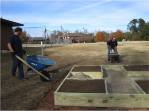 Volunteers move soil to planting beds with wheel barrows